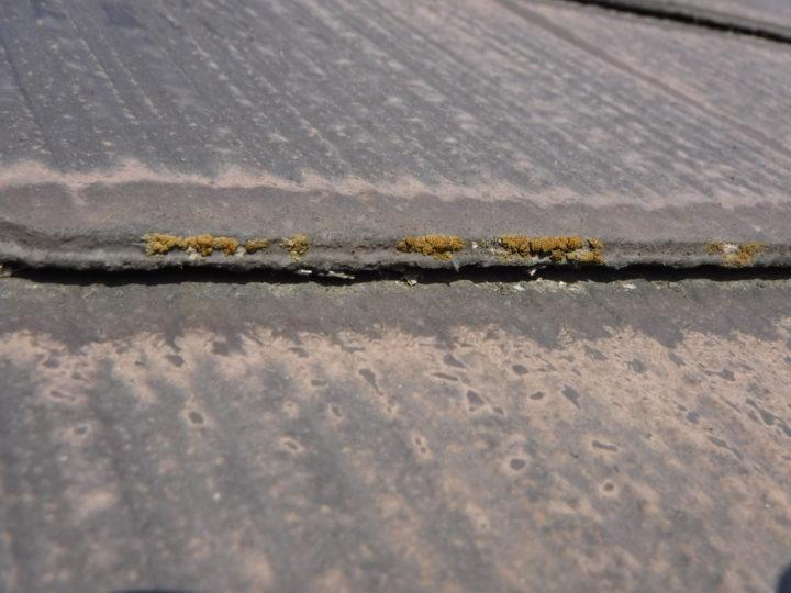 屋根塗装の施工前(浮きと藻の発生)